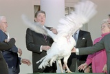 Ronald Reagan at White House Ceremony to Receive the 40th Thanksgiving Turkey. Nov. 13, 1987 Photo