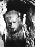 The Curse of the Werewolf, Oliver Reed, 1961 Photo