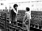 Harold and Maude, from Left, Bud Cort, Ruth Gordon, 1971 Photographie