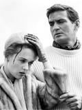 The Birds, Tippi Hedren, Rod Taylor, 1963 Photo