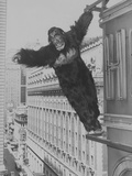 Mighty Joe Young, Publicity Photo, 1949 Photo