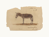 A Donkey, Barranquilla, Colombia Premium Giclee Print by Frederic Edwin Church