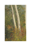Birch Trees in Autumn Premium Giclee Print by Frederic Edwin Church