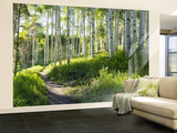 Birch Hiking Trail Non-Woven Vlies Wallpaper Mural Vægplakat i tapetform