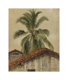 Palm Trees and Housetops, Ecuador Premium Giclee Print by Frederic Edwin Church