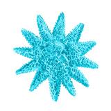Blue Coral 5 Art