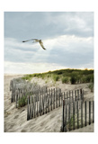 Dawning Seagull and Godbeams Poster
