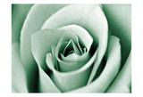 Jade Rose Posters