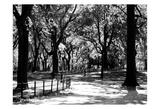 Central Park Walk Poster
