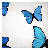 Blue Morphos Prints