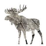 Wood Moose White Mate Prints