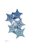 Tidal Starfish 1 Prints