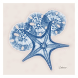 Cerulean Starfish and Sand Dollar Prints