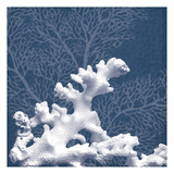 Sea Coral 1 Print
