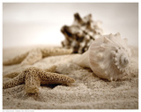 Seashells In The Sand Posters af S. Cunningham