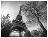 Eiffel Tower With Tree Print by Stéphane Graciet