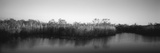 Tall Grass at the Lakeside, Anhinga Trail, Everglades National Park, Florida, USA Photographic Print by  Panoramic Images
