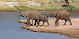 African Elephants (Loxodonta Africana) at River, Samburu National Reserve, Kenya Photographic Print by  Panoramic Images