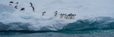 Adelie Penguins (Pygoscelis Adeliae) on Iceberg, Antarctica Photographic Print by  Panoramic Images