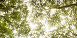 Low Angle View of Sunlight Shining Through the Trees in Summer Photographic Print by  Panoramic Images