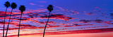 Silhouette of Palm Trees at Sunrise, Santa Barbara, California, USA Photographic Print by  Panoramic Images