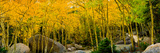 Rocks and Trees in a Forest, Glacier Gorge Trailhead, Colorado, USA Photographic Print by  Panoramic Images