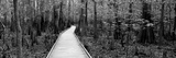 Boardwalk Passing Through a Forest, Congaree National Park, South Carolina, USA Photographic Print by  Panoramic Images