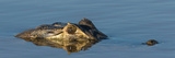 Close-Up of Yacare Caimans (Caiman Yacare) in River, Pantanal Wetlands, Brazil Photographic Print by  Panoramic Images