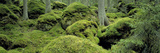 Forest Moss Sweden Photographic Print by  Panoramic Images