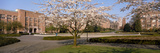 Cherry Blossom Trees in a University, University of Washington, Seattle, King County Photographic Print by  Panoramic Images
