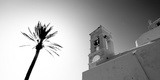 Low Angle View of a Palm Tree Near a Church , Ios, Cyclades Islands, Greece Photographic Print by  Panoramic Images