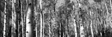 Forest, Grand Teton National Park, Teton County, Wyoming, USA Photographic Print by  Panoramic Images