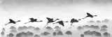 Flamingos Landing, Kenya Fotografisk tryk af Panoramic Images