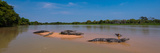 Close-Up of Yacare Caimans (Caiman Yacare) in a River, Pantanal Matogrossense National Park Photographic Print by  Panoramic Images