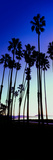 Palm Trees Silhouette at Sunrise, Santa Barbara, California, USA Photographic Print by  Panoramic Images