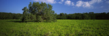 Tree in the Field, Everglades National Park, Florida, USA Photographic Print by  Panoramic Images