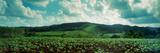Tobacco Fields in Vinales Valley, Vinales, Cuba Photographic Print by  Panoramic Images