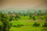 Giraffes on Safari, Mizumi Safari Park, Tanzania, East Africa, Africa Photographic Print by Laura Grier