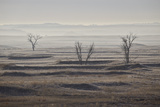 Three Bare Trees on a Hazy Morning, Badlands National Park, South Dakota Photographic Print by James Hager