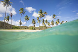Underwater View of the Sandy Beach Surrounded by Palm Trees, Morris Bay, Antigua Fotografisk tryk af Roberto Moiola