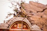 Monkey Sitting in Abandoned Cistern, Jaipur, Rajasthan, India, Asia Photographic Print by Laura Grier
