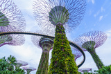 Supertree Grove in the Gardens by the Bay, a Futuristic Botanical Gardens and Park, Marina Bay Photographic Print by Fraser Hall