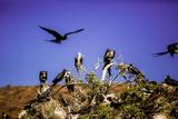 Red-Footed Boobie Birds, Isla Del Espiritu Santo, Baja California Sur, Mexico, North America Photographic Print by Laura Grier