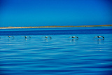 Pelicans, Whale Watching, Magdalena Bay, Mexico, North America Photographic Print by Laura Grier