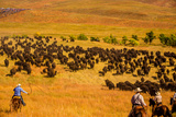 Buffalo Round Up, Custer State Park, Black Hills, South Dakota, United States of America Photographic Print by Laura Grier