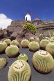 Cactus Garden Jardin De Cactus by Cesar Manrique, Wind Mill, UNESCO Biosphere Reserve Photographic Print by Markus Lange