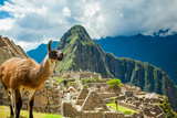 Resident Llama, Machu Picchu Ruins, UNESCO World Heritage Site, Peru, South America Photographic Print by Laura Grier