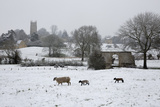 St. James' Church and Sheep with Lambs in Snow, Chipping Campden, Cotswolds Photographic Print by Stuart Black