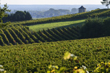 Vineyard, Chinon, Indre Et Loire, Centre, France, Europe Photographic Print by Nathalie Cuvelier