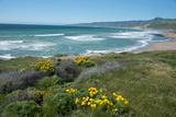 View of Jalama Beach County Park, Near Lompoc, California, United States of America, North America Reproduction photographique par Ethel Davies